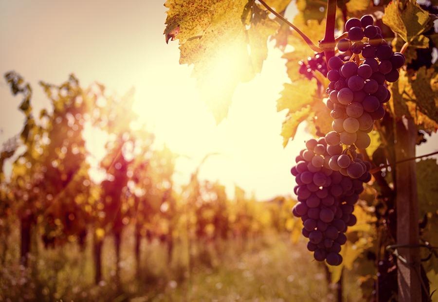 Wineries CPA Santa Rosa